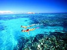 Snorkelling and diving on the great barrier reef in Cairns Australia :)
