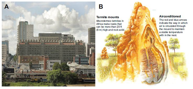 Figure 5 The Eastgate building in Harare, Zimbabwe, adapting the design of nests of termites.