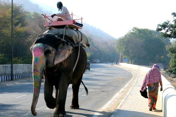 Alleine reisen als Frau: Indien mit Fahrer & Guide