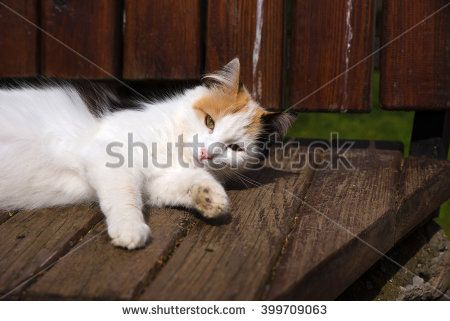 Cute White Cat Laying Down on A Bench