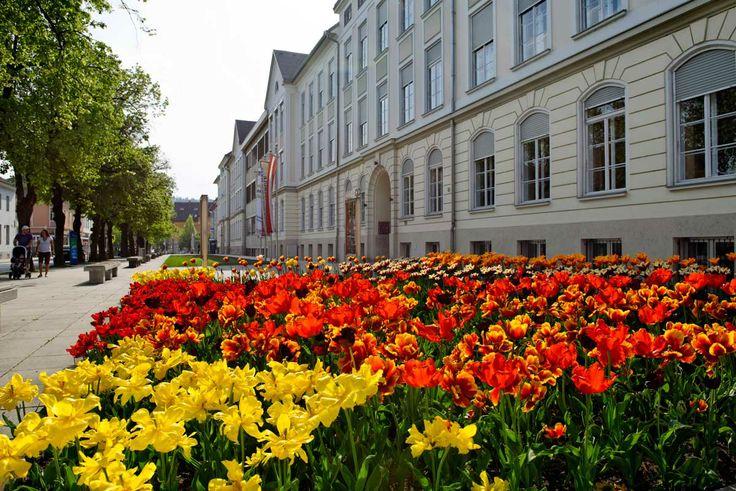 Blumen in der Kaprunter Generator Straße