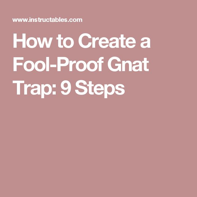 How to Create a Fool-Proof Gnat Trap: 9 Steps