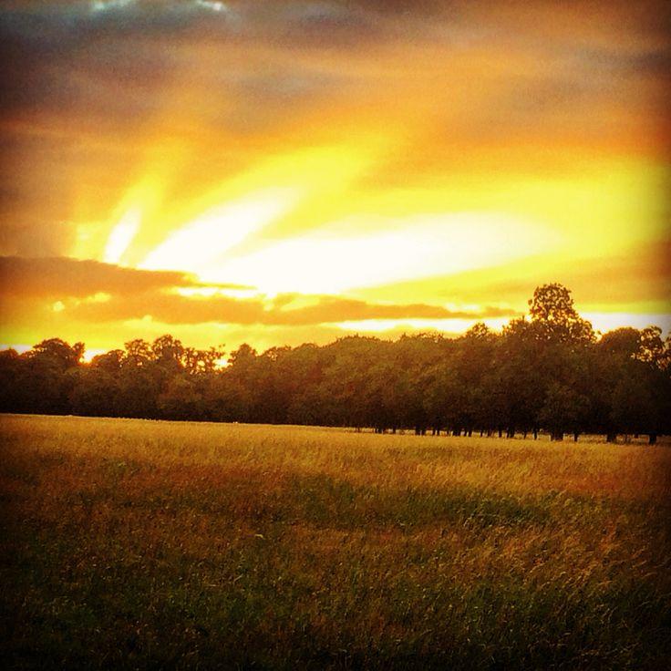 Sunset in the Phoenix Park, Dublin  #dublin #dublincity #dublinireland #phoenixpark #visitdublin