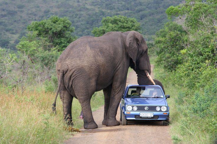 Słoń, Samochód