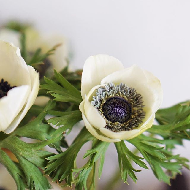 A Stunning Eye Of An Anemone Flower These Are My Favorite Flowers Ever Stunning Eyes Anemone Anemone Flower