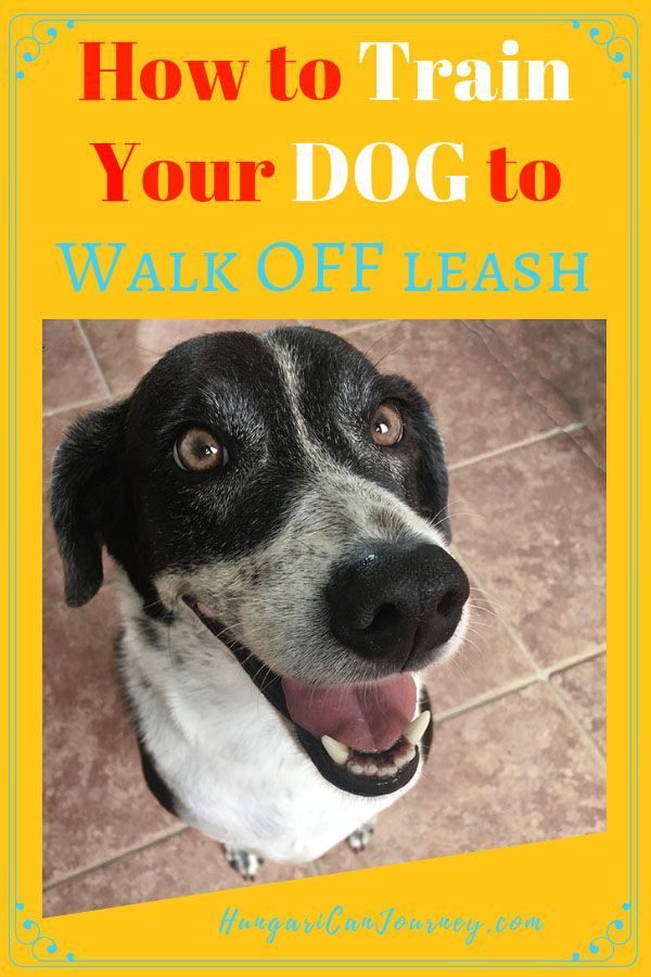 How To Train A Rescue Dog To Walk Off Leash And Stay Close
