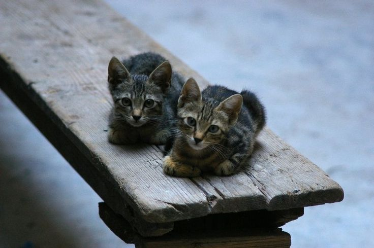 Split Cats by Borf the dog on 500px
