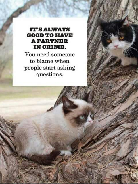 Grumpy Cat & Pokey