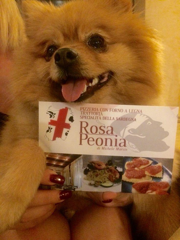 La Ginger vuole dirvi che qui da noi i nostri tesori a 4 zampe sono i benvenuti # pomeranian