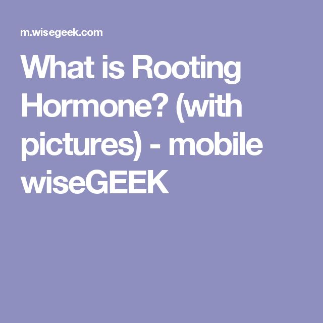 What is Rooting Hormone? (with pictures) - mobile wiseGEEK