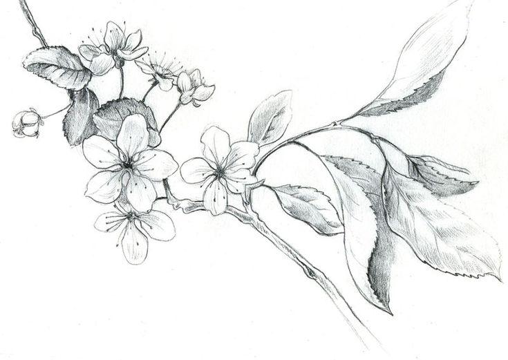 """Résultat de recherche d'images pour """"dessin de fleur de cerisier"""""""