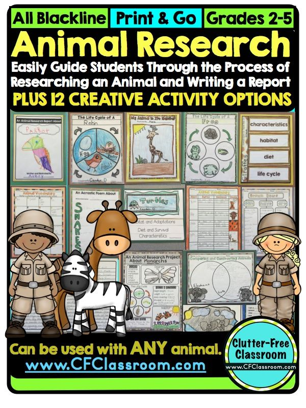 Classroom Enrichment Ideas ~ Best images about jungle safari classroom theme on