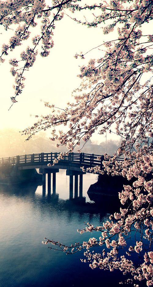 Imagen de flowers, bridge, and wallpaper