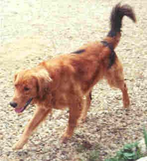 Dog of Two Base Colors - Somatic Mutations