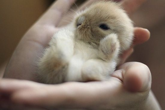 cute puppies and kittens and bunnies | Funny Pictures tumblr ...