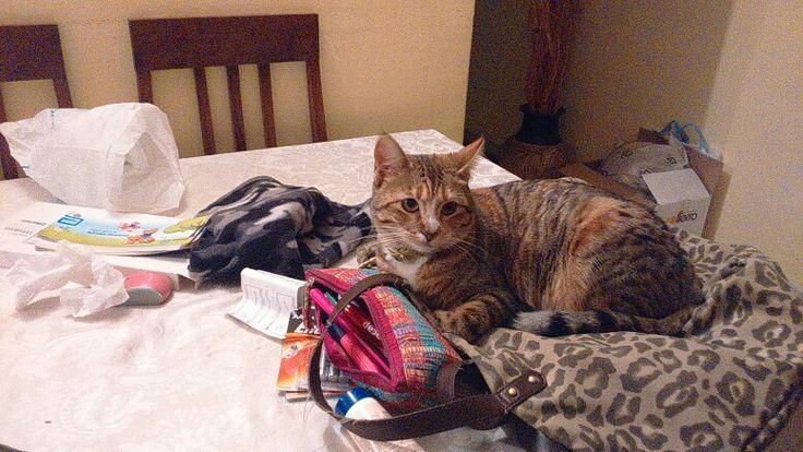 Animal print bag and La Tobias