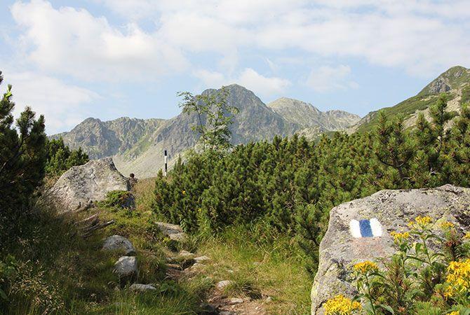 Retezat Mountains - Tomorrow Bear