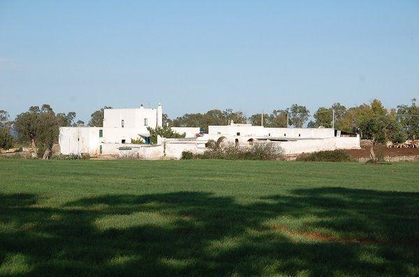 Masseria Fontenuova si trova a Ostuni, in Puglia, nell'area del Parco delle Dune Costiere. E' un'azienda zootecnica che si occupa di produzione e trasformazione del latte in prodotti caseari stagionati o freschi. Vi si allevano bovini e ovini; le vacche appartengono alla razza Bruna pugliese e le pecore soni di razza Moscia leccese.