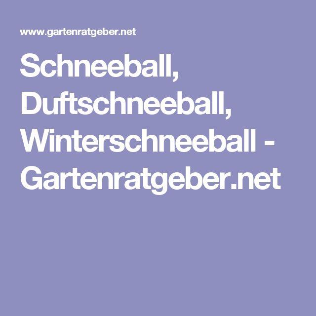 Schneeball, Duftschneeball, Winterschneeball - Gartenratgeber.net