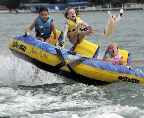 Hey, Let`s take the cat tubing with us!: Picture, Cats, Funny Stuff, Funnies, Humor, Photo, Animal