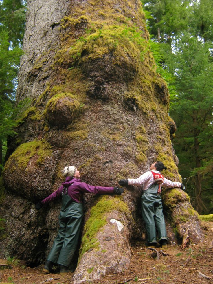 Go Haida Gwaii (B.C., Canada)   Save our forests those of us who own one