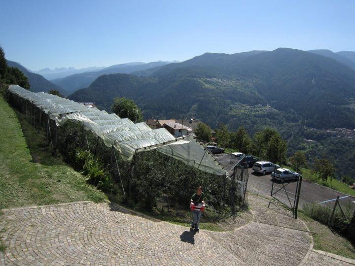 Az. Agricola Zanin Alfons Loc. Caodevilla 38030 Capriana - Trento Tel. e fax: 0462 816285  Cell.  333 3161417 Email: alfons.zanin@alice.it