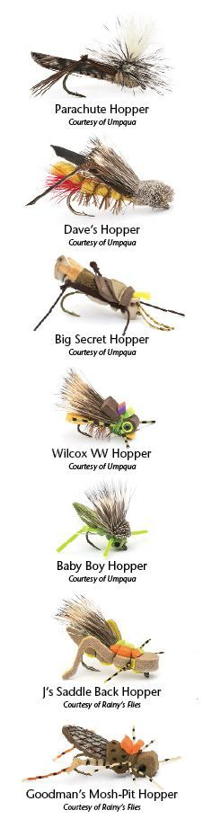Grasshoppers: The Only Kosher Insect   Northwest Fly Fishing