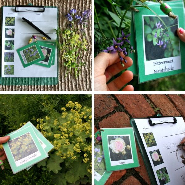 Identifying Backyard Flowers - Playful Learning