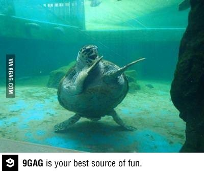 That awkward moment when a turtle is a better dancer than you