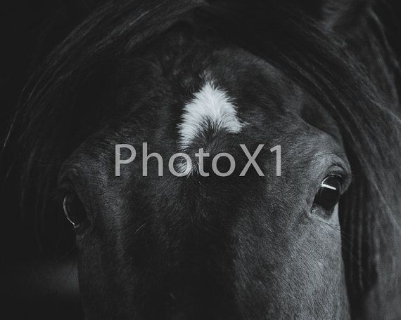 Horse Photography Horse Art Digital Download by PhotoX1 on Etsy
