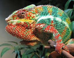 Image result for colourful lizards