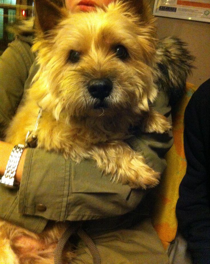 Top Cairn Terrier Ball Adorable Dog - 769fa834e17463d0726af3d627d23d2f  Snapshot_43848  .jpg