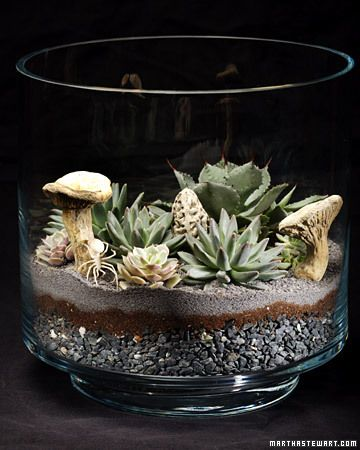 I love how the sand on the top gives a finished, clean look to this terrarium