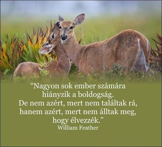 William Feather gondolata a boldogságról. A kép forrása: Csikung útja # Facebook