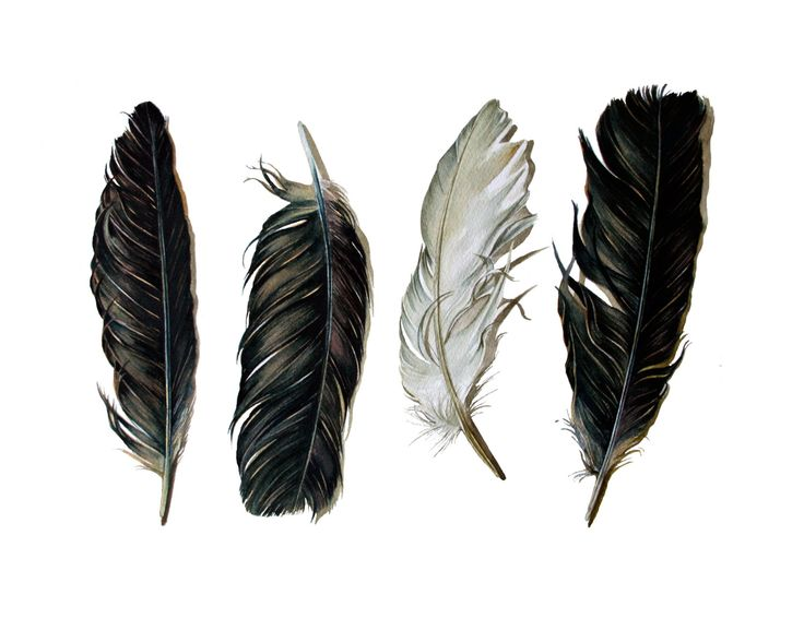 Spirit Feathers - Archival Print of the Watercolor Painting of Crow Feathers.