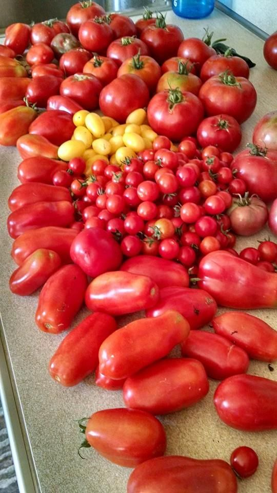 If you are looking for a fresh and healthy tomato sauce recipe that is easy to do, look at this. No peeling required!