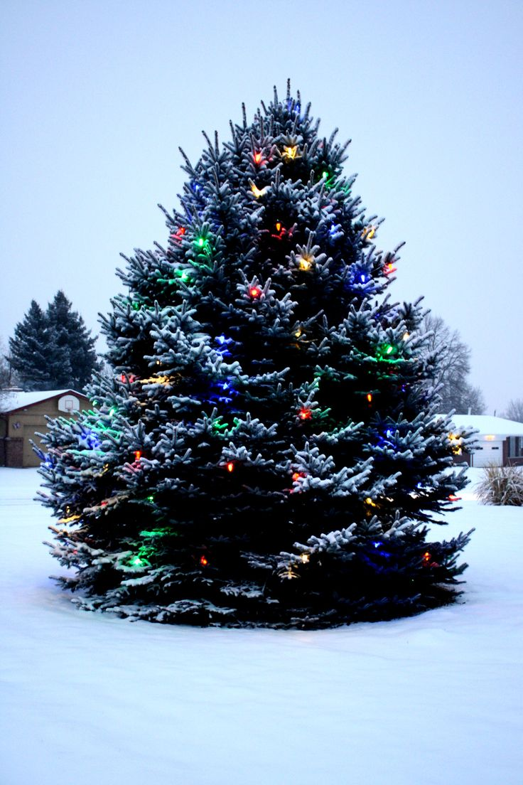 Outdoor christmas tree decorations - Image Detail For Outdoor Christmas Tree With Lights And Snow Picture
