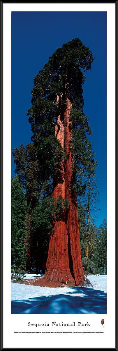 Sequoia National Park Panoramic Picture Framed- Vertical Panoramic Picture