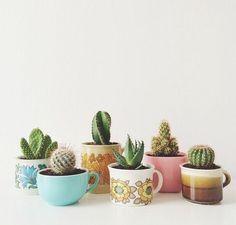 Cactus in coffee mugs.