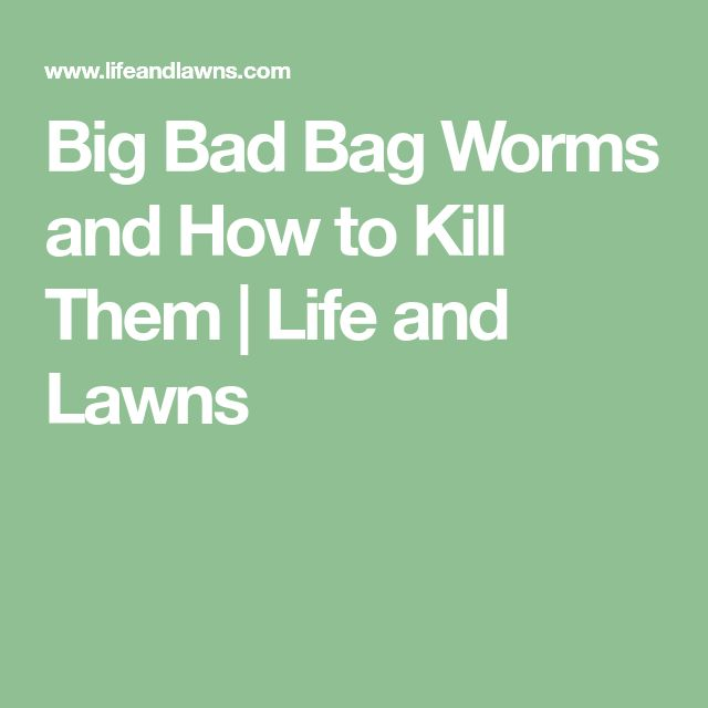 Big Bad Bag Worms and How to Kill Them | Life and Lawns