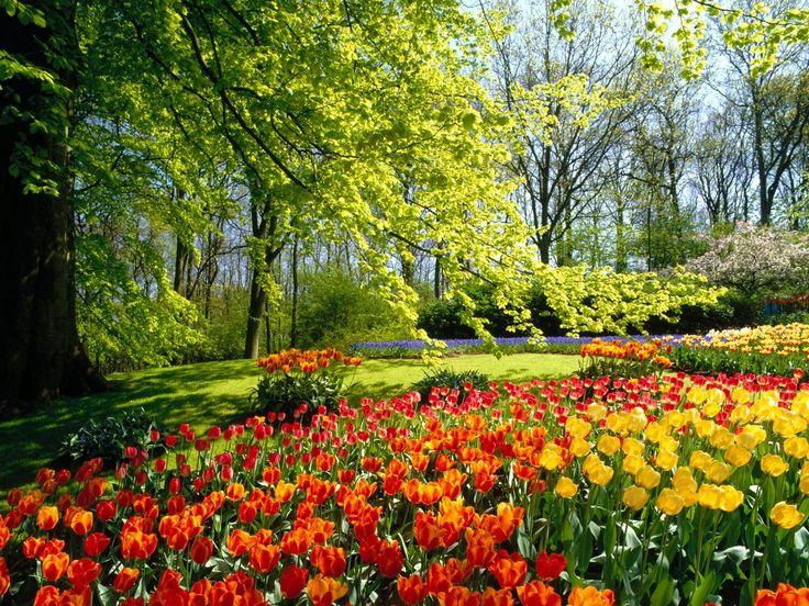 ideas para tu patio y jardn ideales