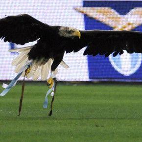(Foto Ansa)  La Lazio usa un'aquila calva tenuta in cattività per fare spettacolo in occasione delle partite. A noi fa una gran pena. E a voi?   Perché no