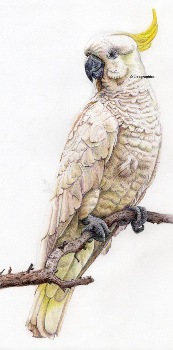 Sulphur Crested Cockatoo Print. £7.00, via Etsy.