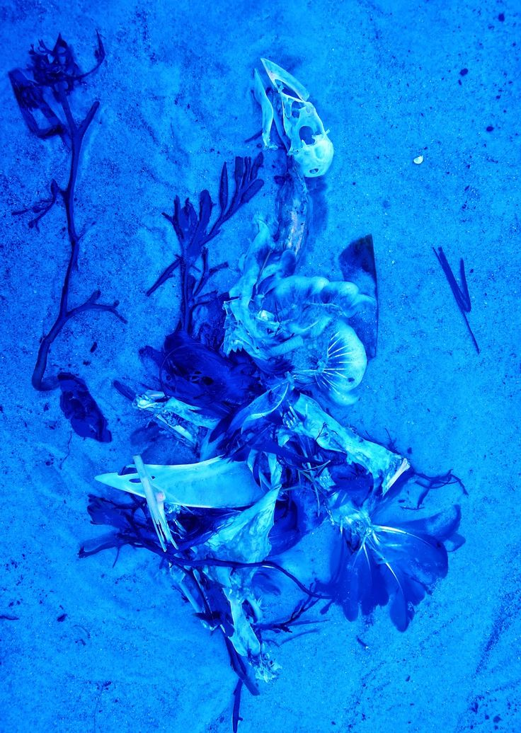 """Patricia Erbelding  """"blue bird"""", C-print enhanced with bee's wax (35 ex), 29x41 cm   Artistes multiples / Multiples d'artistes  LE CABINET D'AMATEUR  12 rue de la Forge Royale 75011 Paris  May 23, 24 2015 2 to 7 pm"""