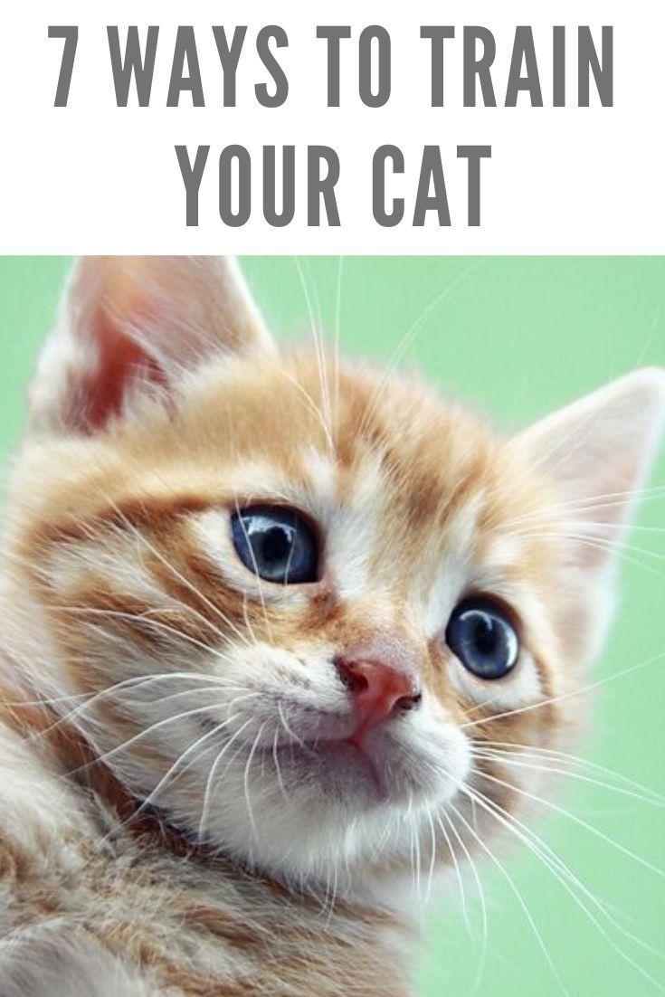 7 Ways To Train Your Cat Cat Catsandkittenstips Train Ways In 2020 Cats Cat Training Cat Behavior
