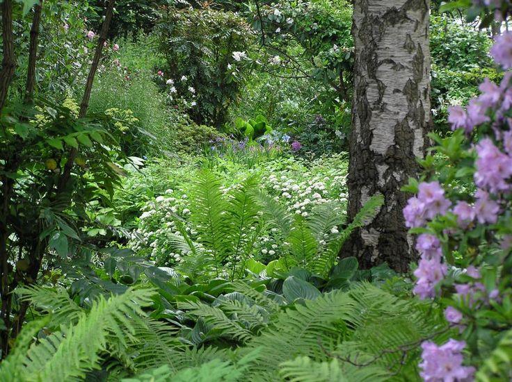 52 besten schattengarten bilder auf pinterest blumen farne und garten pflanzen. Black Bedroom Furniture Sets. Home Design Ideas