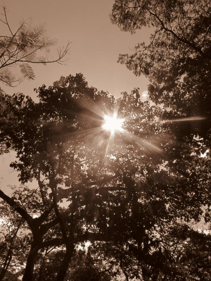 Sepia, Sun