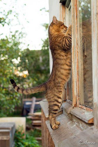 Abridme la ventana que quiero entrar!!!!!!