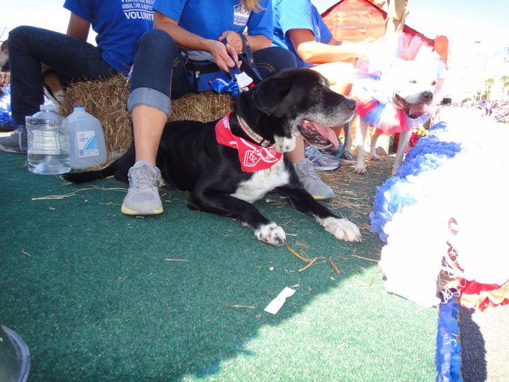 Virginia Beach Animal Care And Adoption Center 341 Birdneck Rd Virginia Beach Va Pet Care Animals Adoption