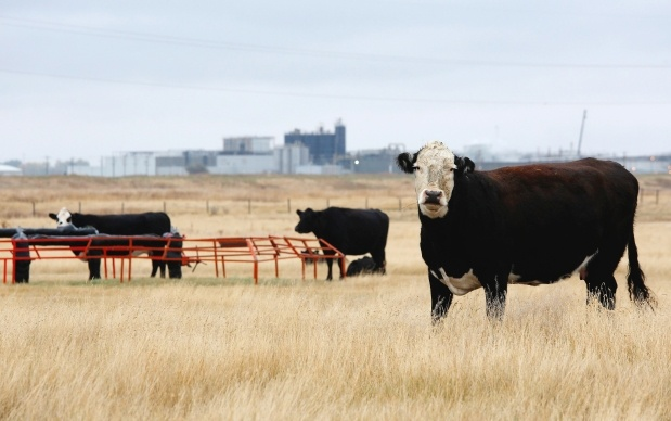 XL Foods may send 5.5+ million kgs of recalled beef back to market if cooked at a high enough temp to kill off E. coli